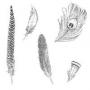 Fine Feathers - Kopie